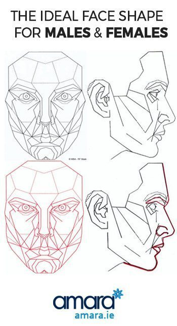 the ideal face shape for males and females